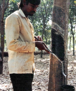 The Rubber Plantation
